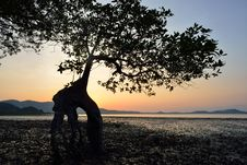 Free Mangrove Trees Silhouette Royalty Free Stock Photo - 29618755
