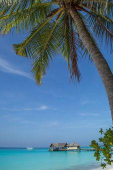 Free Palm Tree On The Beach Royalty Free Stock Photo - 29619465