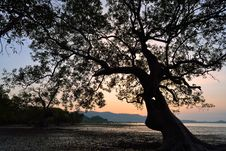 Silhouette Of Tree Sunset Stock Images