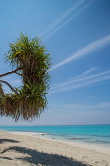 Free BEAUTIFUL BEACH WITH PALM TREES Stock Photo - 29619810