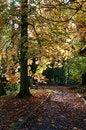 Free Autumn Royalty Free Stock Photos - 29628718