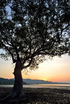 Silhouette Of Tree Sunset Royalty Free Stock Photography