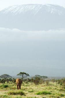 Free African Elephant Under Kilimanjaro Royalty Free Stock Images - 29626559