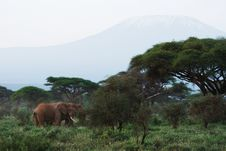 Free African Elephants And Kilimanjaro Mountain Royalty Free Stock Images - 29626729