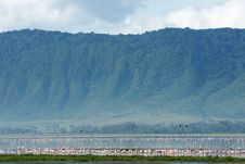 Flamingos In Ngorongoro Crater Royalty Free Stock Images