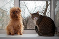 Free Cat And Dog  Sitting On The Window Royalty Free Stock Photography - 29636237