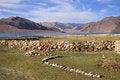 Free Pangong Lake In Ladakh Royalty Free Stock Photos - 29639288