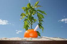 Free Summer Orange Stock Image - 29630721