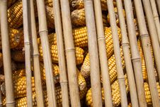 Free Dried Corn Stock Images - 29637434