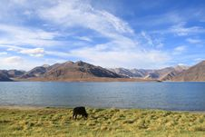 Free Pangong Lake In Ladakh Stock Photography - 29639222