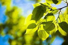 Free Green Leaves Stock Photos - 29640193