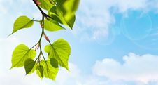 Free Green Leaves Stock Image - 29640471