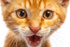 Free Red Little Cat Stock Photography - 29648642