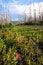 Free Burnt Trees In Montana Stock Photos - 29641883