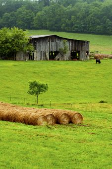 Free Hay Bales Stand Near An Old Barn And Cattle. Stock Images - 29650804