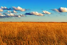 Free Field Of Wild Grass At Sunset Royalty Free Stock Images - 29656339