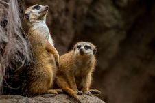 Free What Was That!  Did You Hear That! Royalty Free Stock Image - 29660626