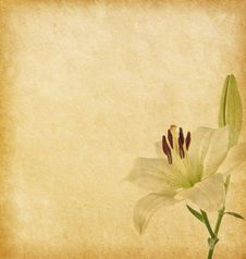 Free Old Grunge Background With White Lily. Stock Image - 29669451