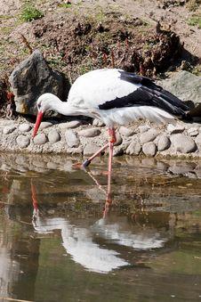 Free Wading Stork Stock Photos - 29680493