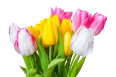 Free Bouquet Of Yellow, White And Pink Tulips Stock Photos - 29685623