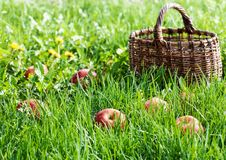 Free Red Apples In The Grass Stock Photos - 29685653