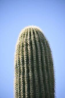 Free Saguaro Cactus Stock Photography - 29693282