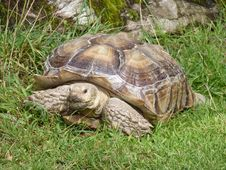Free Tortoise Royalty Free Stock Photo - 29694575