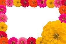Free Frame Of Zinnias Flower Stock Photos - 29698643