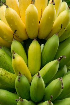 Free Banana Royalty Free Stock Image - 29698726