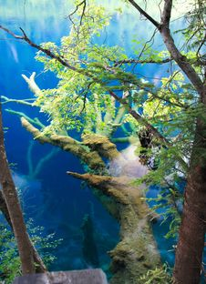 Free Jiuzhaigou Scenic Area Stock Photos - 2971163