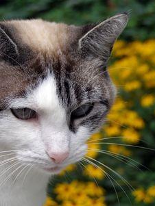 Free Feline Portrait Stock Photo - 2974580