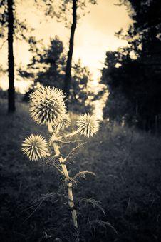 Free Strange Plant Royalty Free Stock Photos - 2974918