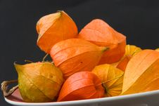 Free Dryly Physalis In The Autumn Stock Image - 2975971