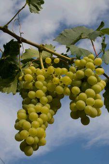 Free A Bunch Of Grape Stock Photos - 2976643