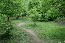 Free Forest Path Royalty Free Stock Photography - 2979007
