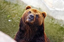 Free Brown Bear In The Zoo Stock Photo - 2979830