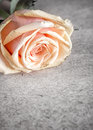 Free Pink Rose On Old Letter Royalty Free Stock Image - 29709836