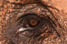 Free Elephant Eye Cut Royalty Free Stock Photography - 29708057