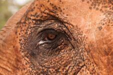 Free Elephant Eye Royalty Free Stock Photography - 29708067