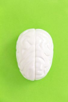 Free Brain Concept Stock Photo - 29709180