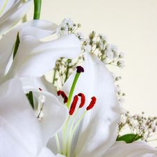 Free White Calla Lilly Royalty Free Stock Photography - 29709677