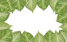 Free Green Fresh Leaves Frame Royalty Free Stock Photo - 29710865