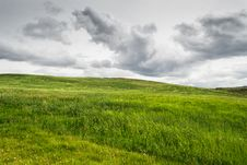 Free Green Grass Royalty Free Stock Photography - 29715807