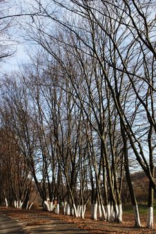Free Bare Trees In Spring Stock Images - 29718924