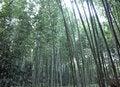 Free Bamboo Grove At Arashiyama, Kyoto - Japan Stock Photography - 29724482