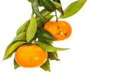 Free Tangerine Royalty Free Stock Photos - 29723368