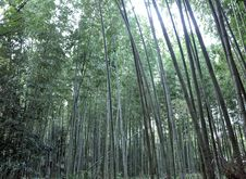 Free Bamboo Grove At Arashiyama, Kyoto - Japan Stock Photography - 29724482