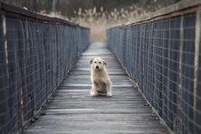 Free Small Dog On Bridge Royalty Free Stock Photos - 29726558