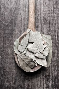 Free Bay Leaves Stock Photography - 29726822