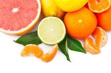 Free Citrus Fruits Stock Photo - 29728030